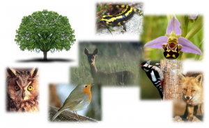 Balade naturaliste
